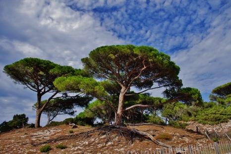 Corse / 2011
