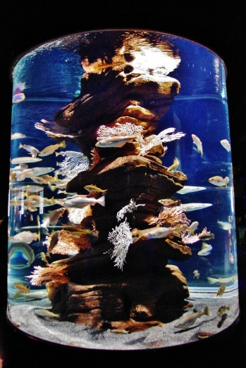 Aquarium de Paris / 2011