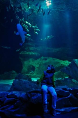 Aquarium de Paris /2011