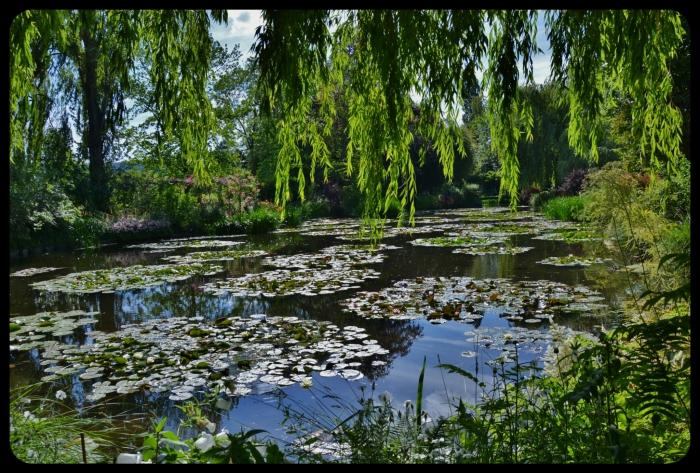 bassin de Giverny
