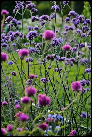 Jardin des plantes 2014