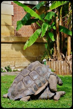la ménagerie du jardin des plantes 2014