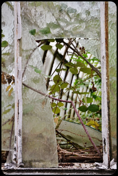 Jardin d'Agronomie Tropicale 2015