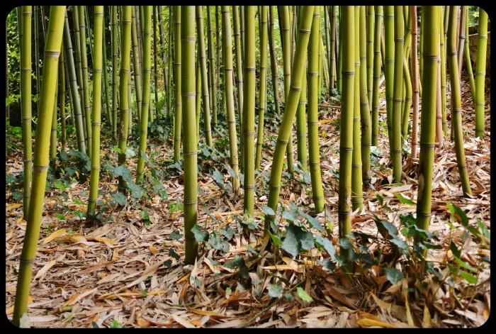 Le jardin d'agronomie tropicale
