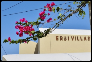 branche de Bougainvillier. Grèce /Santorin 08.2017