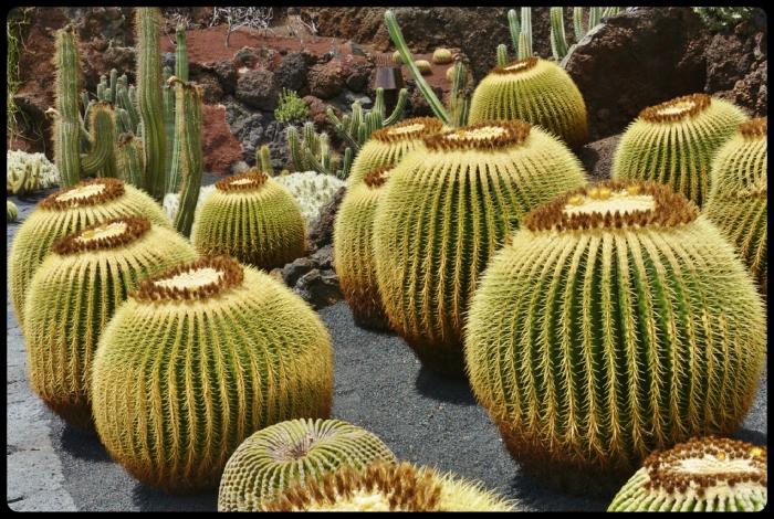 Jardin de Cactus/ Lanzarote 2018